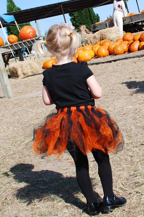 PumpkinTutus2