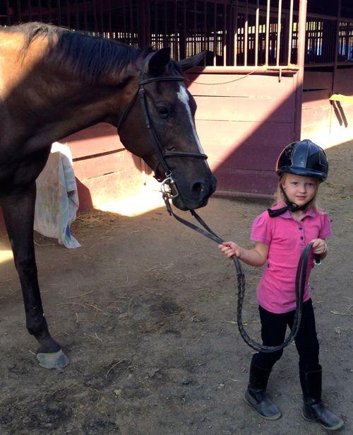 Horse13e
