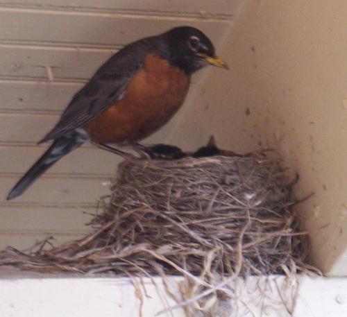 Mama_bird_1_2